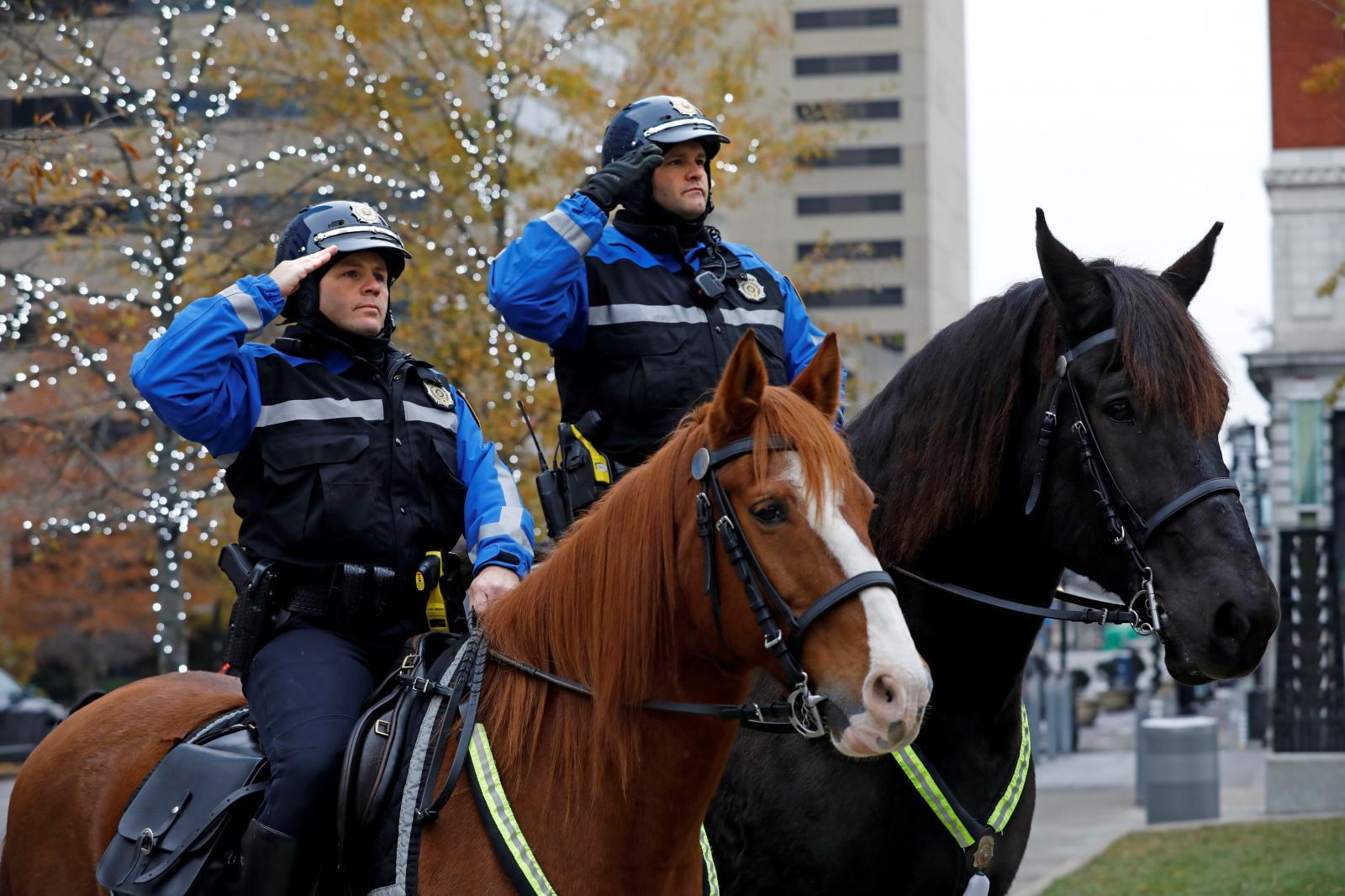 Police horse Finley passes away   City of Lexington