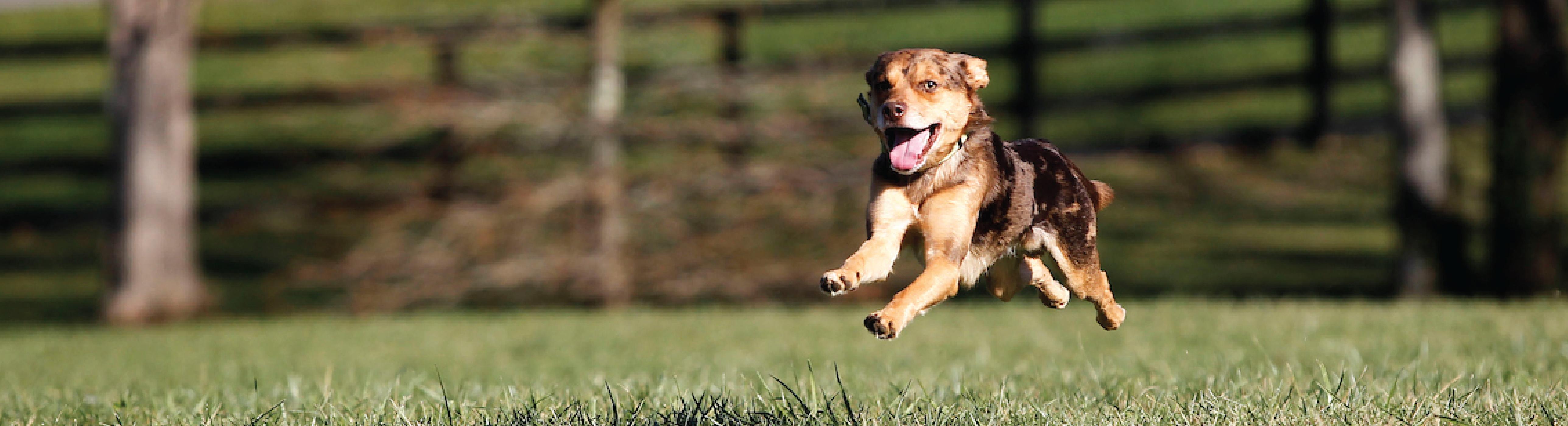 Lexington Dog Park Rules