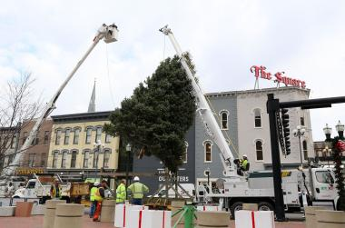 large tree being placed