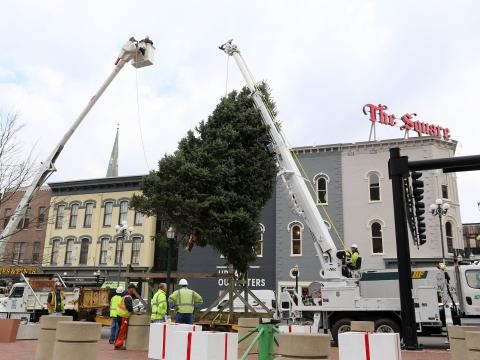 city seeking three christmas trees for downtown parks